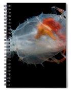 Blind Lobster Spiral Notebook