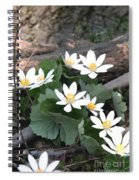 Bloodroot Spiral Notebook