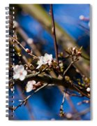 Blooming Tree With White Flowers Spiral Notebook