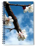 Blossoming Apricot Spiral Notebook