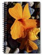 Blossoms Final Performance Spiral Notebook