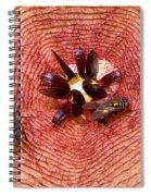 Blowflies On Stapelia Spiral Notebook