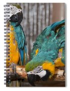 Blue And Gold Macaw Pair Spiral Notebook