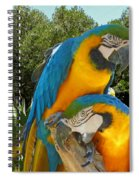 Blue And Gold Macaws Spiral Notebook