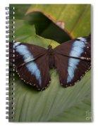 Blue Banded Morpho Spiral Notebook