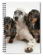 Blue Belton Setter And Dachshund Pups Spiral Notebook