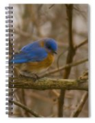 Blue Bird Perched On Willow Spiral Notebook