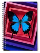 Blue Butterfly In Pink Box Spiral Notebook