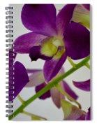 Blue Charm X Aridang Blue Orchid - 3 Spiral Notebook