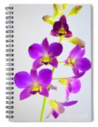Blue Charm X Aridang Blue Orchid - 1 Spiral Notebook