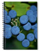 Blue Cohosh Spiral Notebook