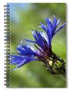 Blue Cornflower Spiral Notebook