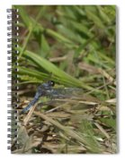 Blue Corporal Dragonfly Spiral Notebook