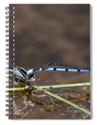 Blue Damsel Spiral Notebook