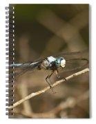 Blue Dasher 8769 Spiral Notebook