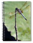 Blue Dasher Dragonfly Dancer Spiral Notebook