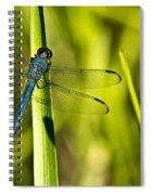Blue Dragonfly 1 Spiral Notebook