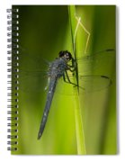Blue Dragonfly 12 Spiral Notebook