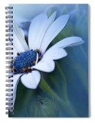 Blue Eyed African Daisy Spiral Notebook