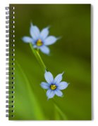 Blue-eyed Grass Wildflower - Sisyrinchium Angustifolium Spiral Notebook