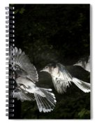 Blue Jay In Flight Spiral Notebook