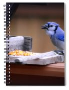 Blue Jay On Backyard Feeder Spiral Notebook