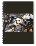 Blue Jay Staying Warm Spiral Notebook
