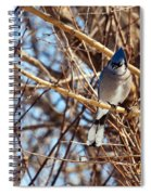Blue Jay Thinking Spiral Notebook