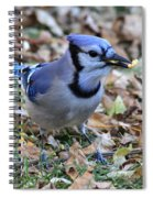 Blue Jay With A Piece Of Corn In Its Mouth Spiral Notebook