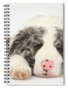 Blue Merle Border Collie Pup Spiral Notebook