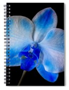 Blue Orchid Bloom Spiral Notebook