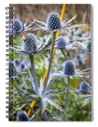 Blue Stem Sea Holly Spiral Notebook