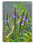 Blue Vervain - Verbena Hastata Spiral Notebook