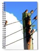 Bluebird Gathering Spiral Notebook