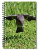 Bluebird In Flight Spiral Notebook