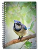 Bluejay In A Tree Spiral Notebook