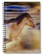 Blurred View Of Horses Running Through Spiral Notebook