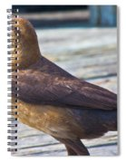 Boat Tail Grackle Spiral Notebook