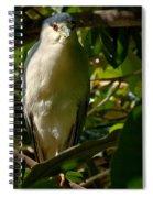Blackcrowned Night Heron Spiral Notebook