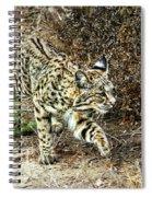 Bobcat Stalking Prey Spiral Notebook
