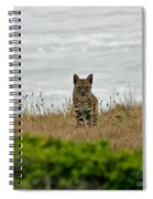Bodega Bay Bobcat Spiral Notebook