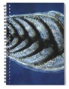 Bolivina Robusta Lm Spiral Notebook