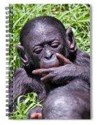 Bonobo 2 Spiral Notebook