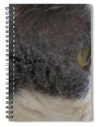Boojer's Eye Spiral Notebook