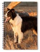 Border Collie At Sunset Spiral Notebook