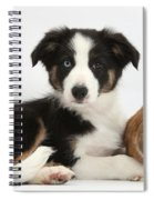 Border Collie Pup And Netherland-cross Spiral Notebook