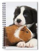 Border Collie Pup And Tricolor Guinea Spiral Notebook