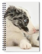 Border Collie Puppy With Rough-haired Spiral Notebook