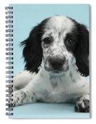 Border Collie X Cocker Spaniel Puppy Spiral Notebook