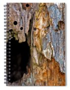 Bored By Woodpeckers Feeding Spiral Notebook